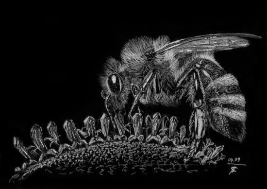 Maya the Bee by kofkof